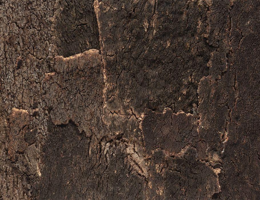 Muurdecoratie Bark