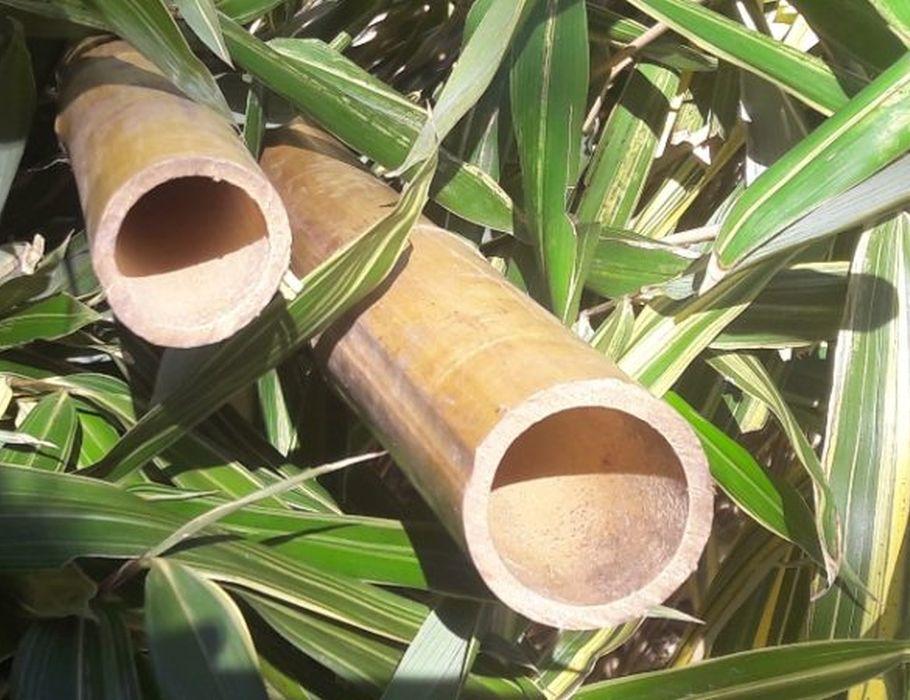 Bamboepaal naturel