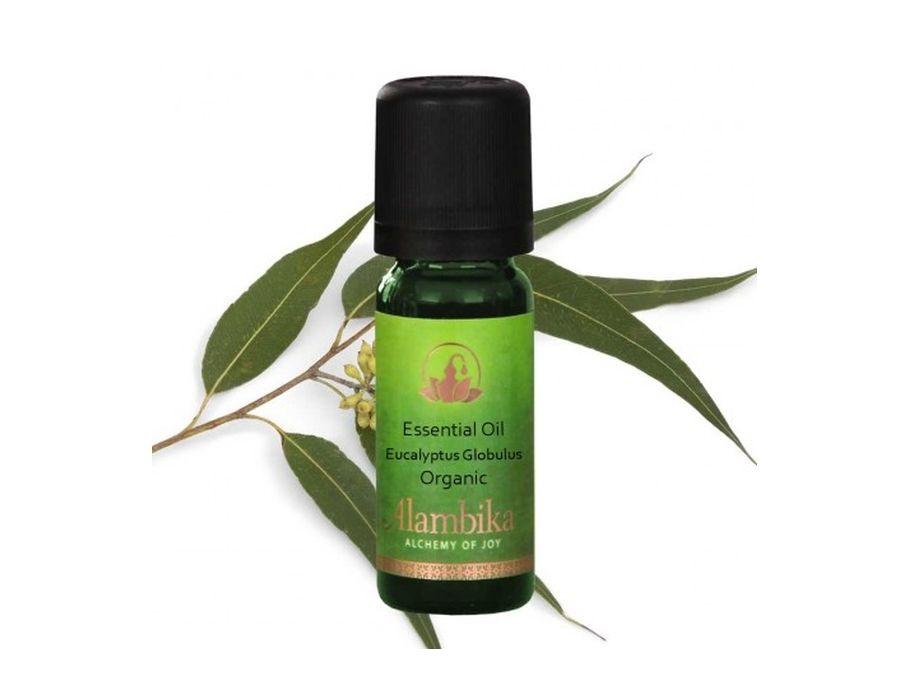 Duftöl - Eucalyptus - 10 ml