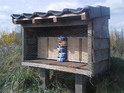 Metselbijen inzetten voor een betere bestuiving van fruit.