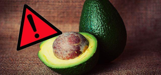 """Medien warnen: """"Avocados sind nicht vegan"""""""