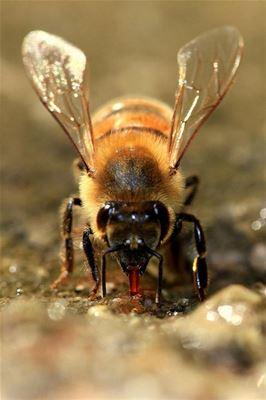 Bijenproducten met Bijproducten