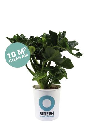 Ogreen staat voor Vital, Clean & Green