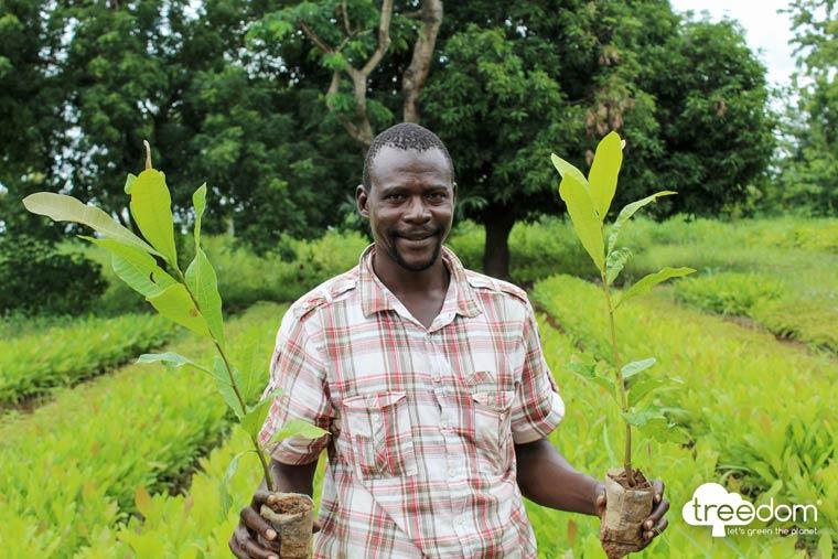 Een wereld vol redenen om een boom weg te geven